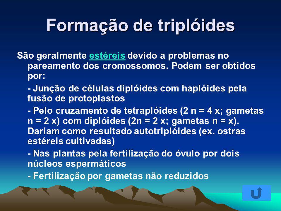 Formação de triplóides São geralmente estéreis devido a problemas no pareamento dos cromossomos. Podem ser obtidos por:estéreis - Junção de células di