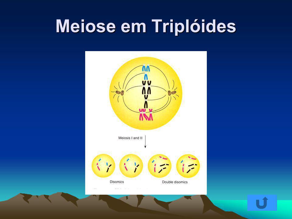Meiose em Triplóides