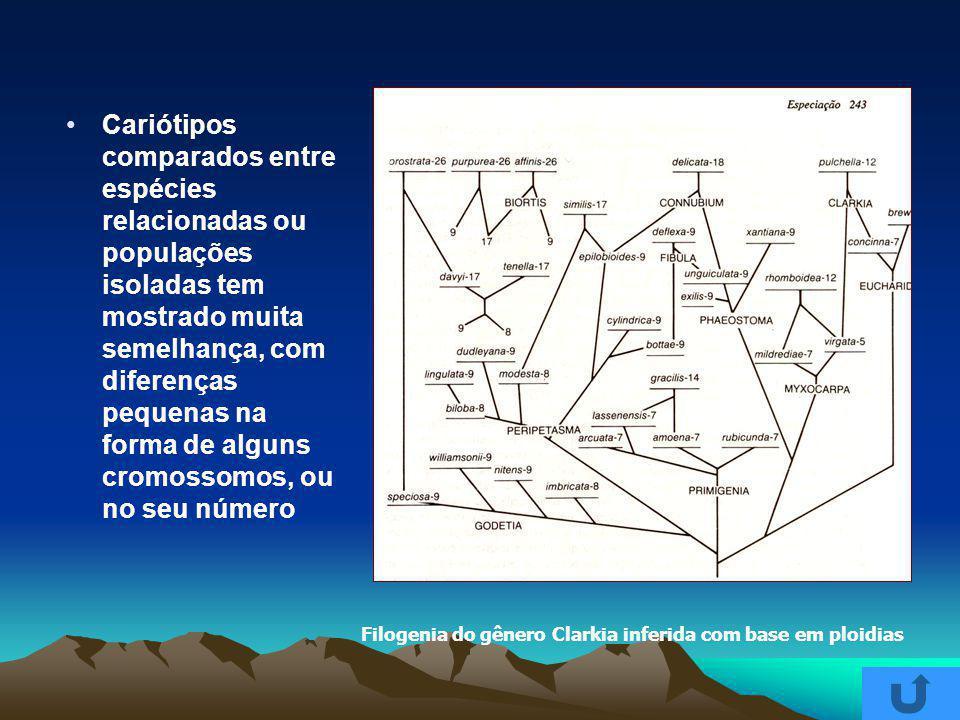 Cariótipos comparados entre espécies relacionadas ou populações isoladas tem mostrado muita semelhança, com diferenças pequenas na forma de alguns cro