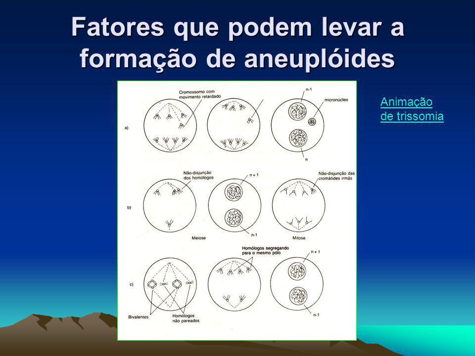 Fatores que podem levar a formação de aneuplóides Animação de trissomia