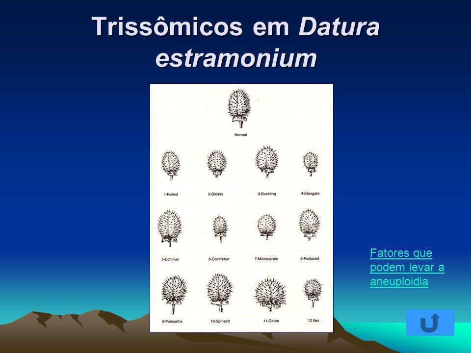 Trissômicos em Datura estramonium Fatores que podem levar a aneuploidia