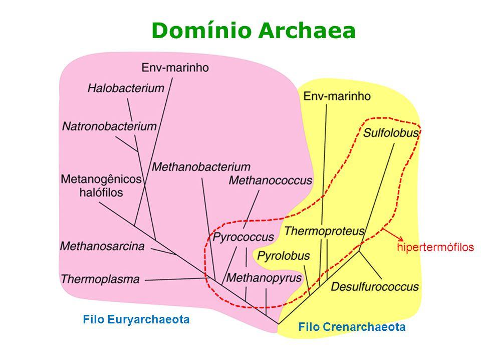Domínio Archaea Filo Euryarchaeota Filo Crenarchaeota hipertermófilos