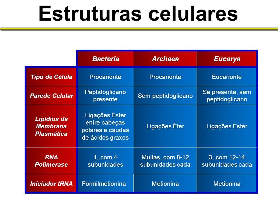 Fracastoro (sec.XVI): –seres pequenos causadores de doenças Plenciz (séc.