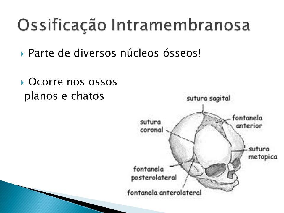 Parte de diversos núcleos ósseos! Ocorre nos ossos planos e chatos