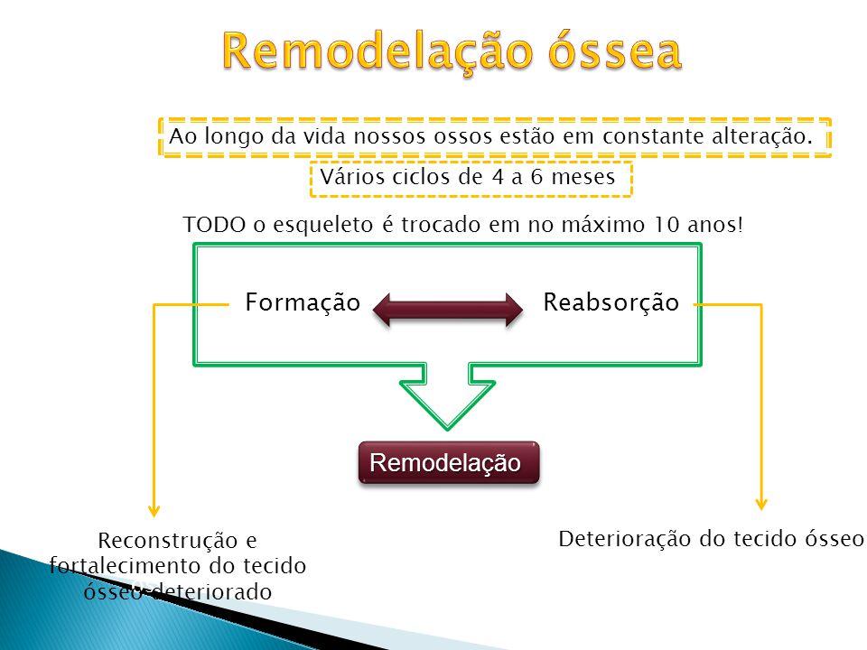 Resultado de um processo dinâmico FormaçãoReabsorção RemodelaçãoRemodelação Ao longo da vida nossos ossos estão em constante alteração. Vários ciclos