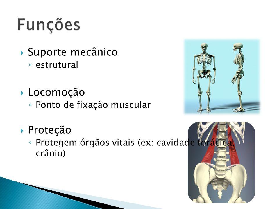 Suporte mecânico estrutural Locomoção Ponto de fixação muscular Proteção Protegem órgãos vitais (ex: cavidade torácica, crânio)