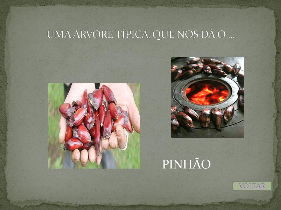 PINHÃO VOLTAR