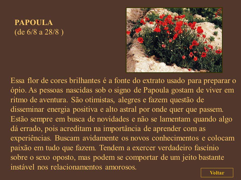 LÍRIO (de 12/7 a 5/8 ) As propriedades alucinógenas da flor do lírio fizeram dessa planta um símbolo da magia para muitas civilizações, inclusive a at