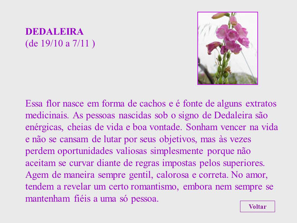 CRISÂNTEMO (de 24/9 a 18/10 ) A justiça e a nobreza de caráter são os atributos associados a essa flor, cuja origem se perde no tempo. As pessoas nasc