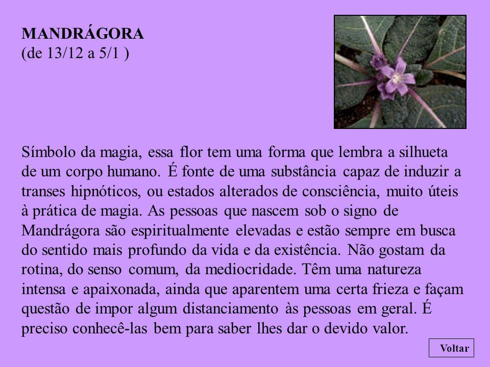 ÍRIS (de 8/11 a 12/12 ) Na Atlântida, essa flor era o símbolo do trabalho e da dedicação. As pessoas nascidas sob o signo de Íris tendem a ser esforça