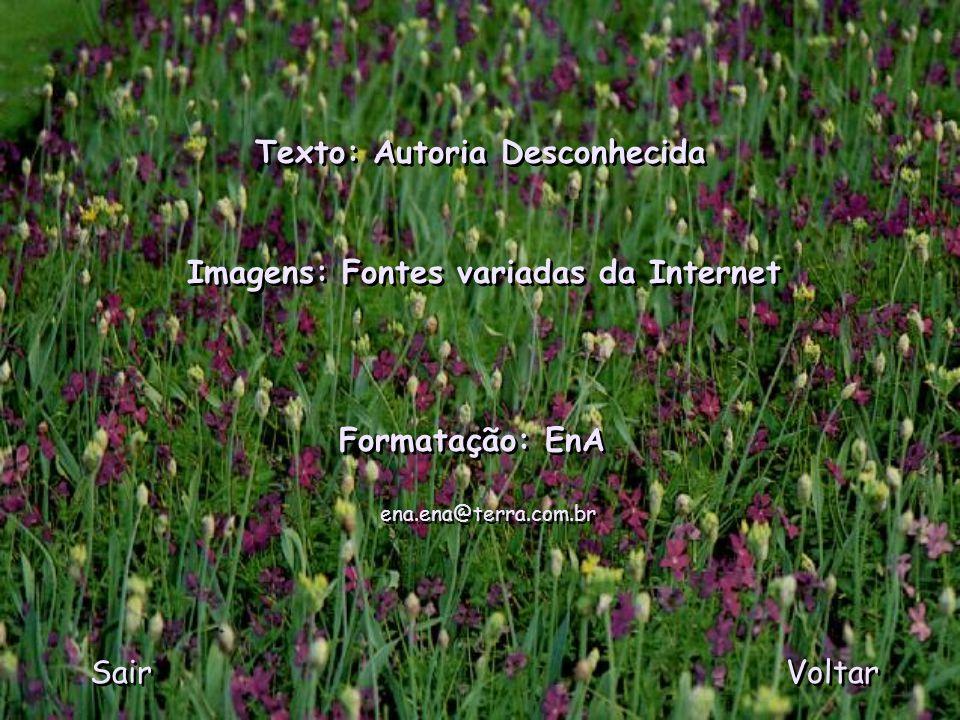 MANDRÁGORA (de 13/12 a 5/1 ) Símbolo da magia, essa flor tem uma forma que lembra a silhueta de um corpo humano. É fonte de uma substância capaz de in