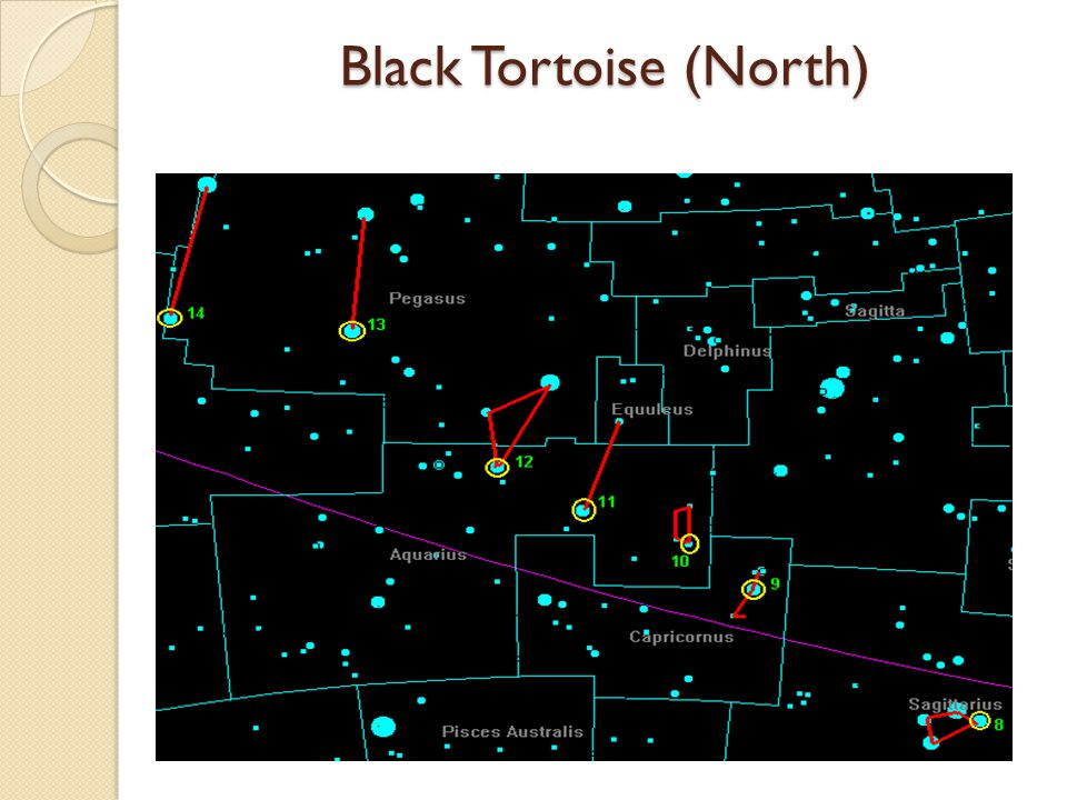 Black Tortoise (North)