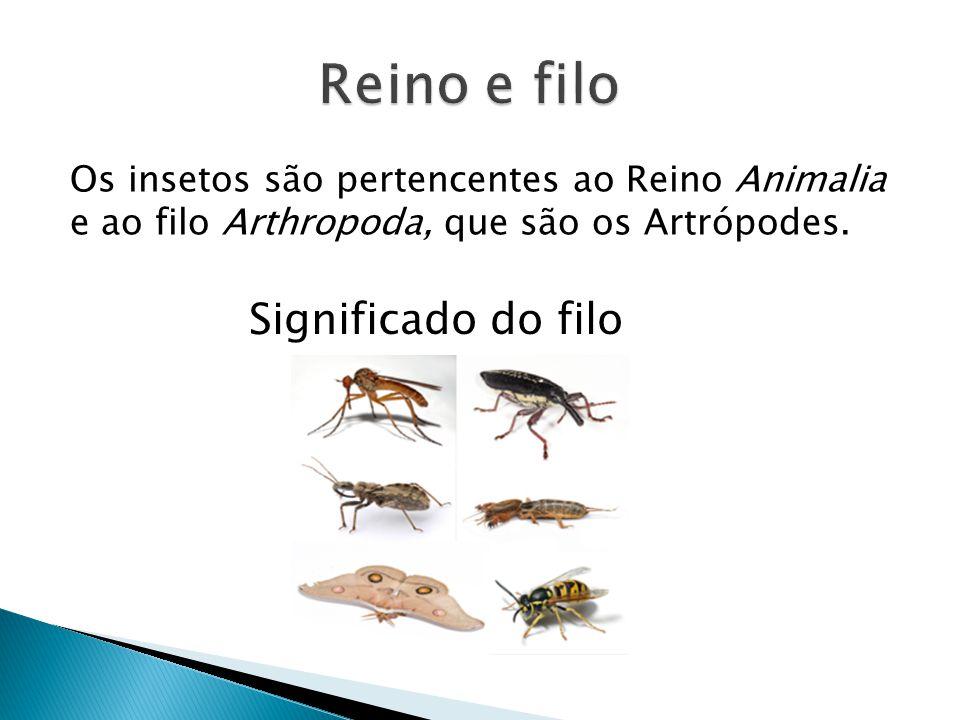 Os insetos são pertencentes ao Reino Animalia e ao filo Arthropoda, que são os Artrópodes. Significado do filo