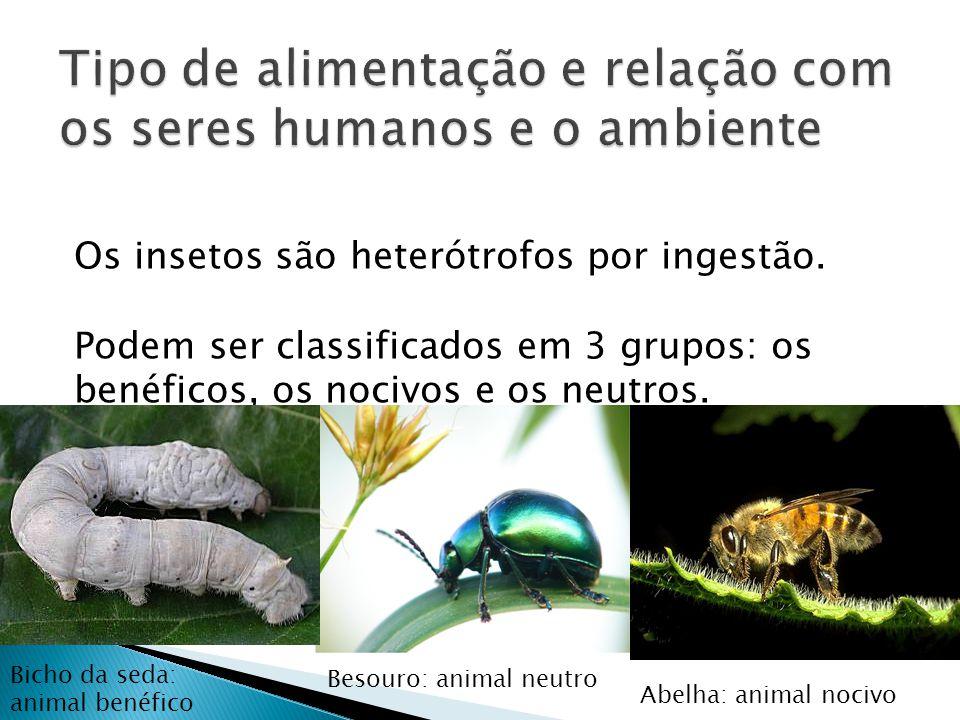 Os insetos são heterótrofos por ingestão. Podem ser classificados em 3 grupos: os benéficos, os nocivos e os neutros. Abelha: animal nocivo Besouro: a