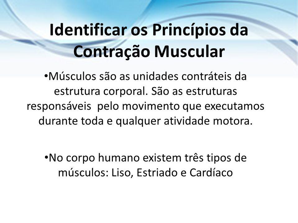 Identificar os Princípios da Contração Muscular Músculos são as unidades contráteis da estrutura corporal. São as estruturas responsáveis pelo movimen