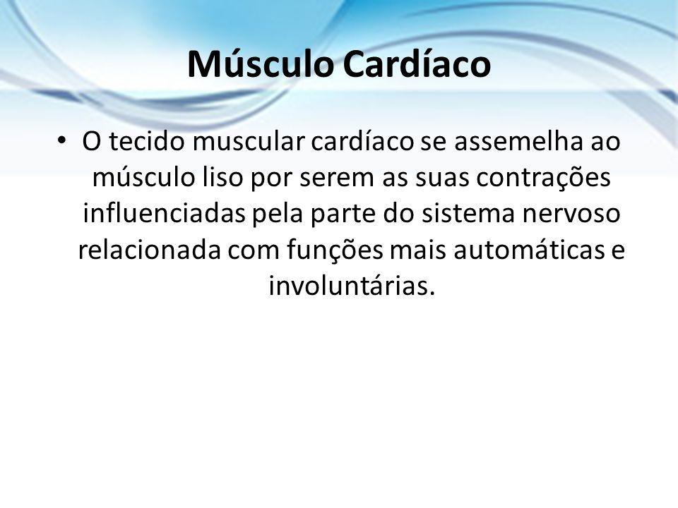 Músculo Cardíaco O tecido muscular cardíaco se assemelha ao músculo liso por serem as suas contrações influenciadas pela parte do sistema nervoso rela
