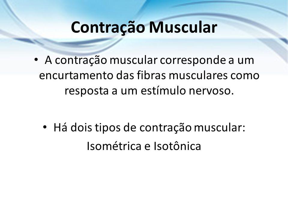 Contração Muscular A contração muscular corresponde a um encurtamento das fibras musculares como resposta a um estímulo nervoso. Há dois tipos de cont