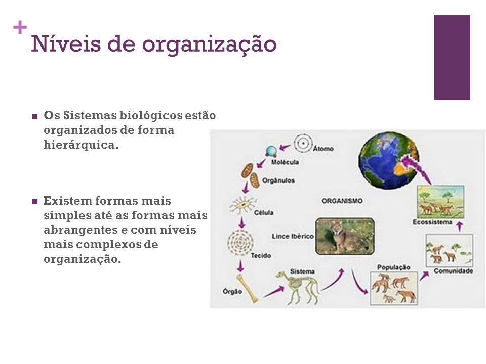 + Níveis de organização Os Sistemas biológicos estão organizados de forma hierárquica. Existem formas mais simples até as formas mais abrangentes e co