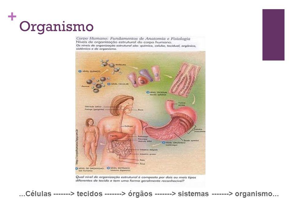 + Organismo...Células -------> tecidos -------> órgãos -------> sistemas -------> organismo...