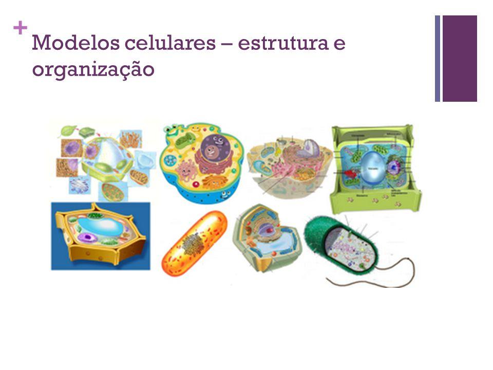 + Modelos celulares – estrutura e organização