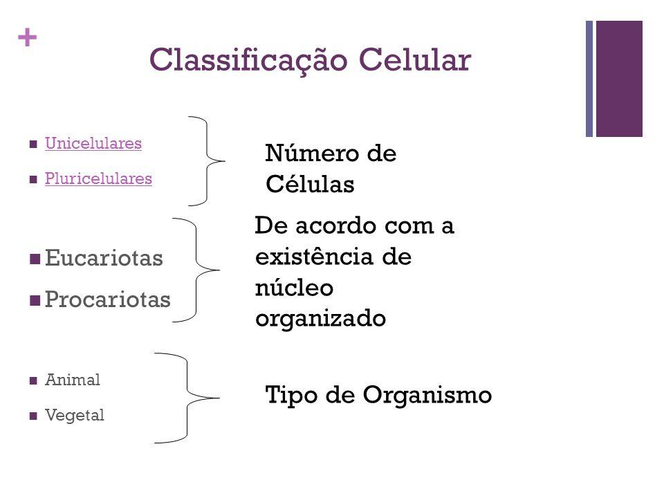 + Classificação Celular Unicelulares Pluricelulares Eucariotas Procariotas Animal Vegetal Número de Células De acordo com a existência de núcleo organ