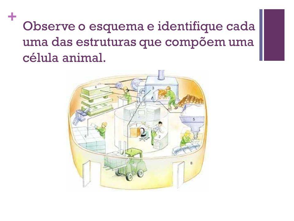 + Observe o esquema e identifique cada uma das estruturas que compõem uma célula animal.