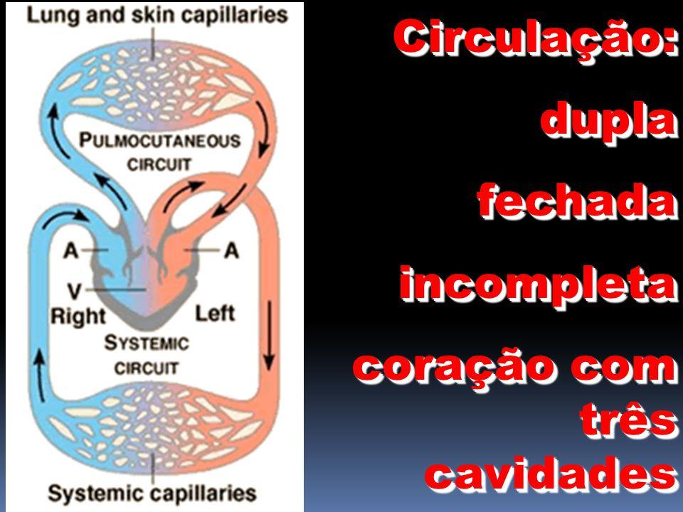 Circulação:duplafechadaincompleta coração com três cavidades Circulação:duplafechadaincompleta