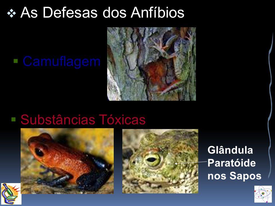 As Defesas dos Anfíbios Camuflagem Substâncias Tóxicas Glândula Paratóide nos Sapos
