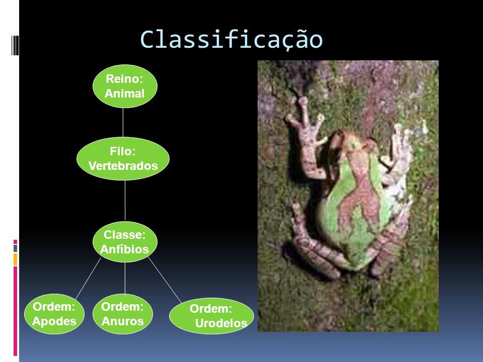 Classificação Ordem: Anuros Classe: Anfíbios Filo: Vertebrados Reino: Animal Ordem: Apodes Ordem: Urodelos