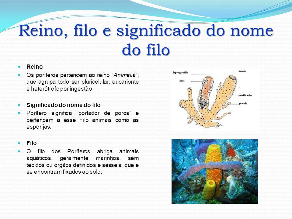 Reino, filo e significado do nome do filo Reino Os poríferos pertencem ao reino Animalia, que agrupa todo ser pluricelular, eucarionte e heterótrofo p