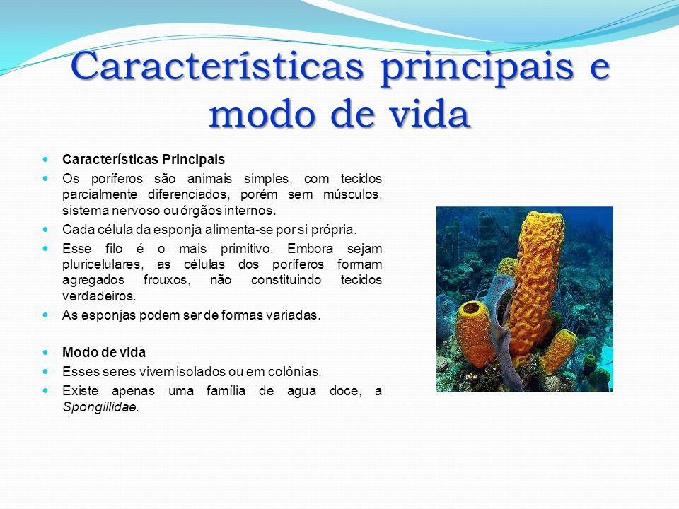 Características principais e modo de vida Características Principais Os poríferos são animais simples, com tecidos parcialmente diferenciados, porém s