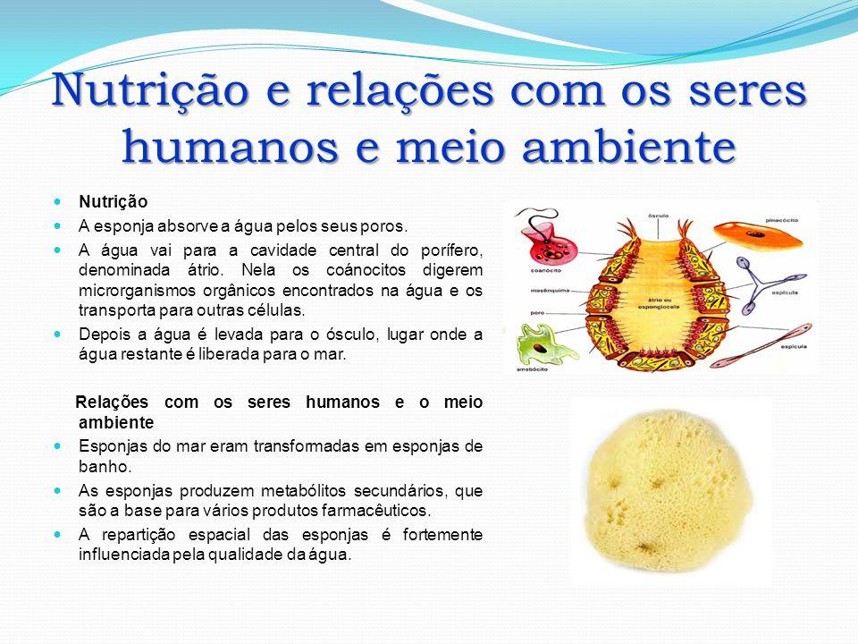 Nutrição e relações com os seres humanos e meio ambiente Nutrição A esponja absorve a água pelos seus poros. A água vai para a cavidade central do por