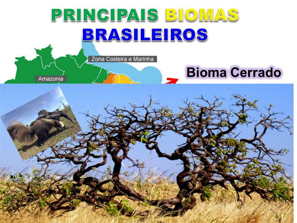 Distrito Federal, Goiás, Maranhão, Mato Grosso do Sul, Minas Gerais, Tocantins, além de porções menores de outros seis estados. Savana Brasileira. Árv