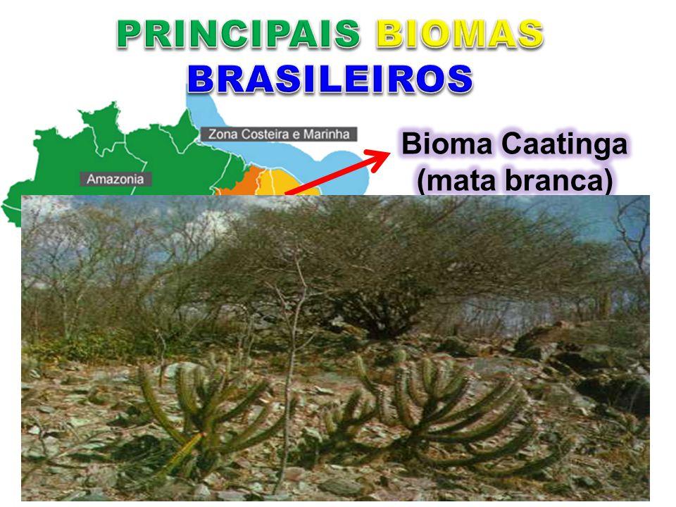 Ceará, Bahia, Paraíba, Pernambuco, Piauí, Rio Grande do Norte, Alagoas, Sergipe, Minas gerais e Maranhão. No período seco a maior parte das árvores pe