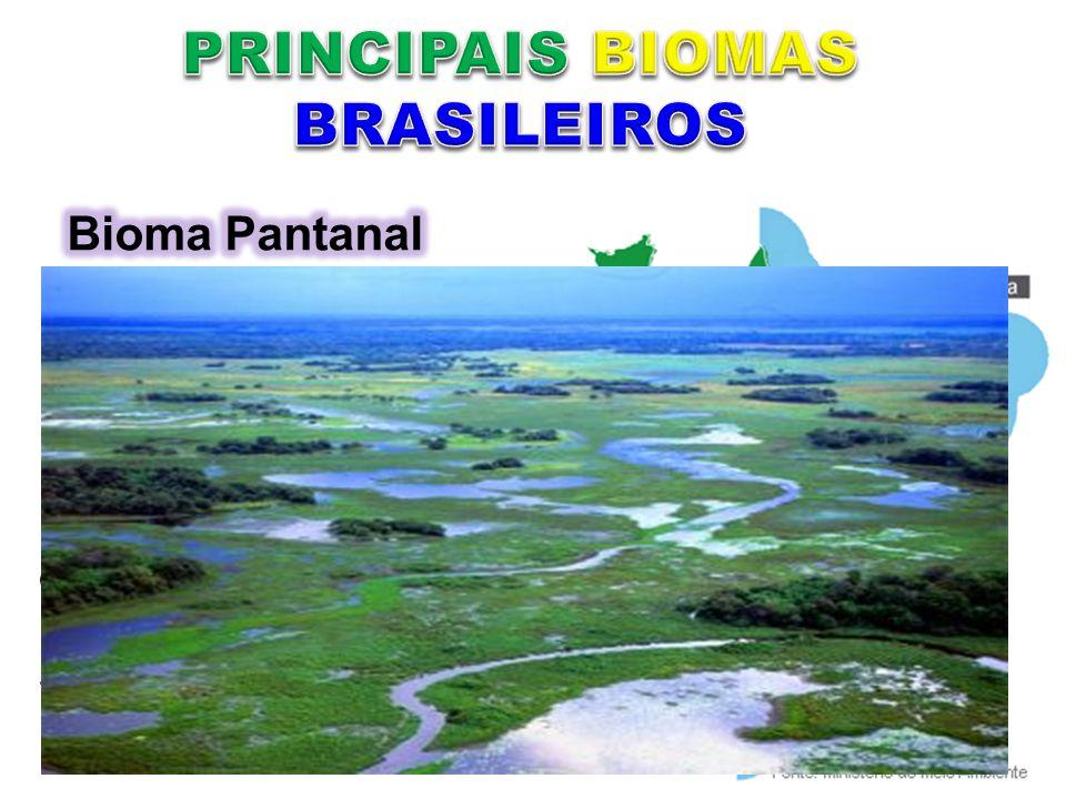 Mato Grosso e Mato Grosso do Sul A proximidade com a Amazônia e com o Cerrado faz com que o Pantanal apresente algumas formações vegetais próximas às