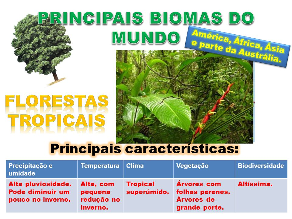 Precipitação e umidade TemperaturaClimaVegetaçãoBiodiversidade Alta pluviosidade e ausência de estação seca.