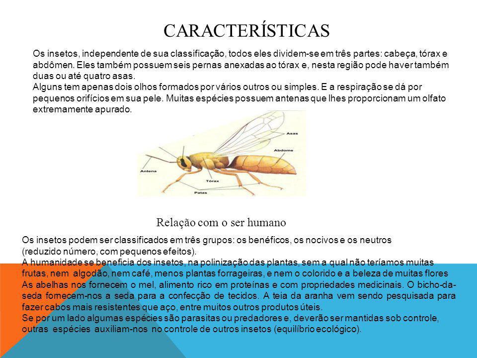 REPRODUÇÃO A grande parte dos insetos se origina de ovos que são depositados em lugares propícios ao seu desenvolvimento como plantas.