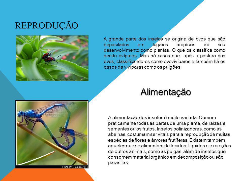 QUESTÕES 1) Diga uma das principais características dos insetos.