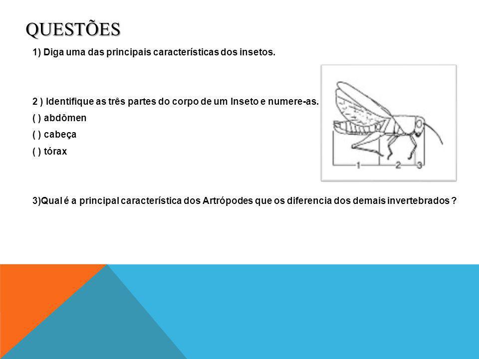 RESPOSTAS Resposta Questão 1 Ter abdômen, tórax e cabeça Resposta Questão 2 (1) (3) (2) Resposta questão 3 A principal característica que diferencia os artrópodes dos demais invertebrados são as patas articuladas.