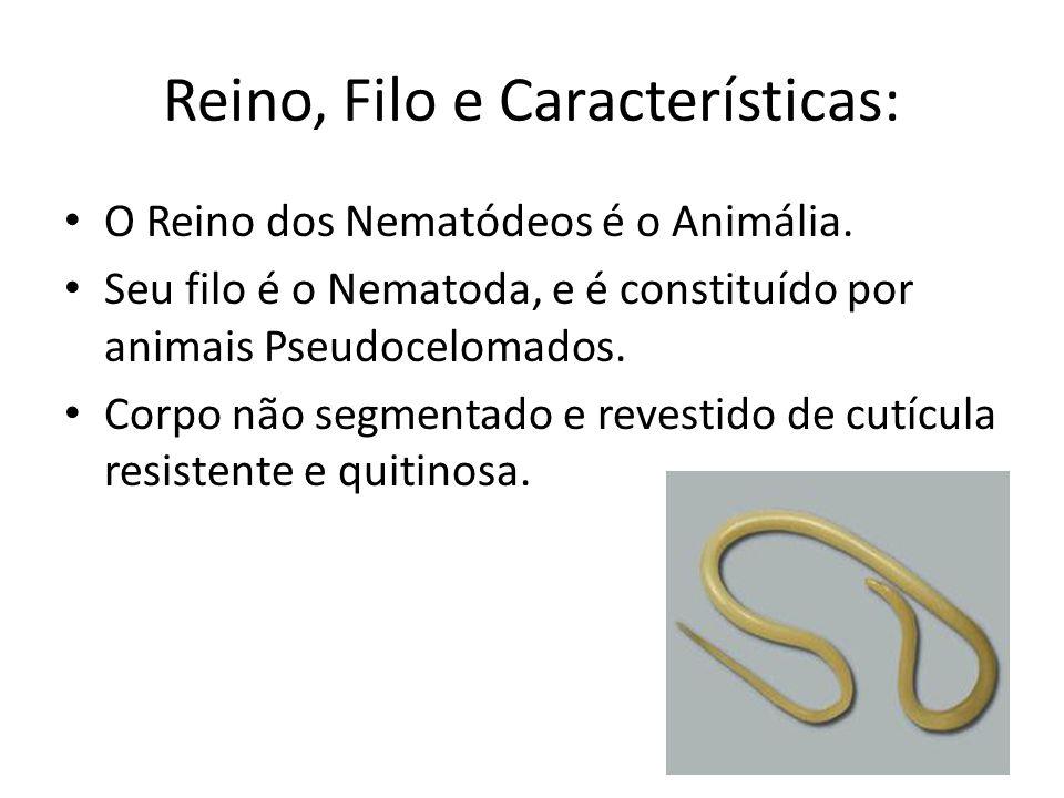 Reino, Filo e Características: O Reino dos Nematódeos é o Animália. Seu filo é o Nematoda, e é constituído por animais Pseudocelomados. Corpo não segm