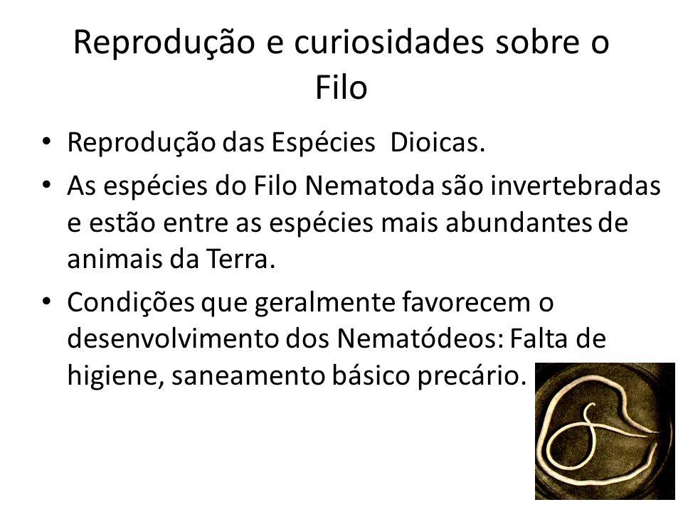 Reprodução e curiosidades sobre o Filo Reprodução das Espécies Dioicas. As espécies do Filo Nematoda são invertebradas e estão entre as espécies mais