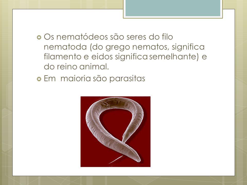 Os nematódeos são seres do filo nematoda (do grego nematos, significa filamento e eidos significa semelhante) e do reino animal. Em maioria são parasi