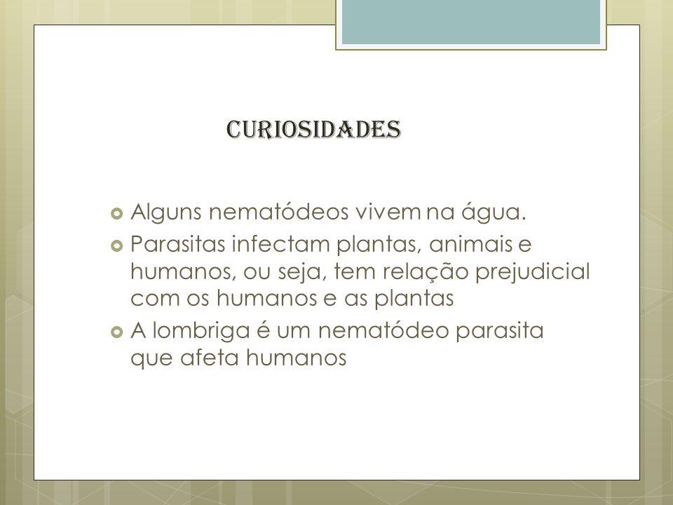 Alguns nematódeos vivem na água. Parasitas infectam plantas, animais e humanos, ou seja, tem relação prejudicial com os humanos e as plantas A lombrig