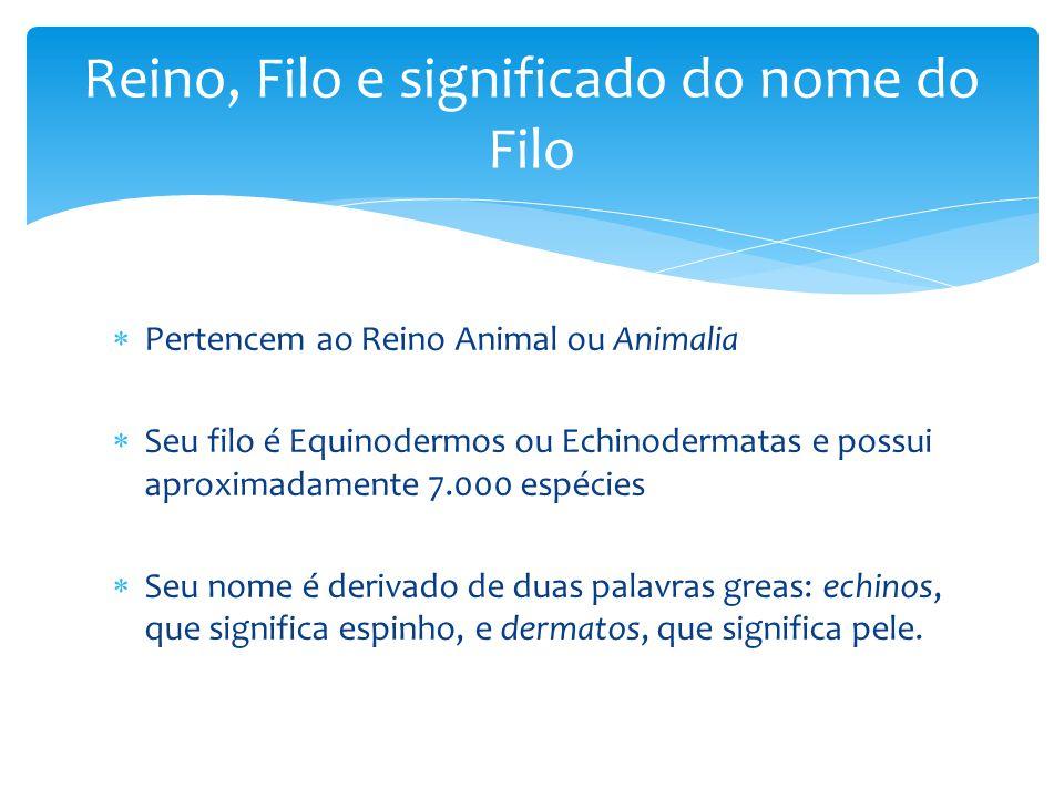 Pertencem ao Reino Animal ou Animalia Seu filo é Equinodermos ou Echinodermatas e possui aproximadamente 7.000 espécies Seu nome é derivado de duas palavras greas: echinos, que significa espinho, e dermatos, que significa pele.