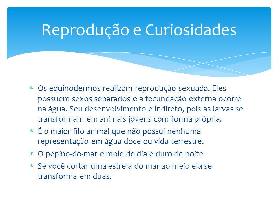 Os equinodermos realizam reprodução sexuada. Eles possuem sexos separados e a fecundação externa ocorre na água. Seu desenvolvimento é indireto, pois
