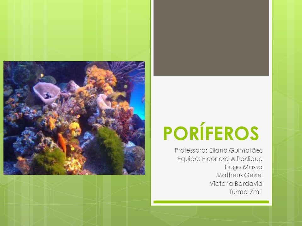 Características Principais Animalia Parazoa Porífera Portador de poros Unicelulares e heterótrofos 8000 espécies Tecidos verdadeiros aquáticos (marinhos) Estrutura corporal Outras características