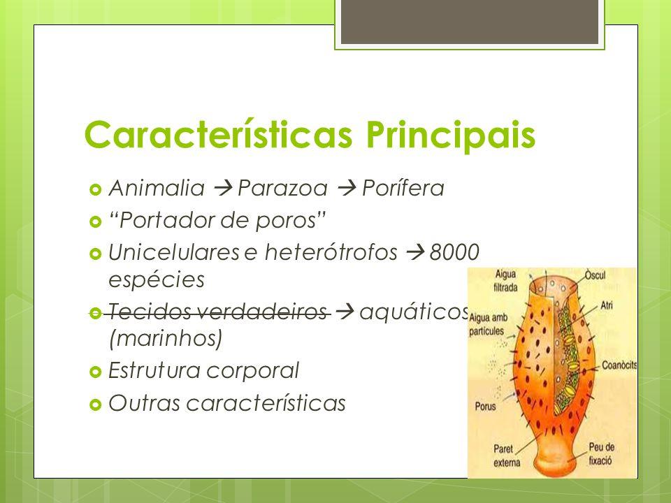 Características Principais Animalia Parazoa Porífera Portador de poros Unicelulares e heterótrofos 8000 espécies Tecidos verdadeiros aquáticos (marinh