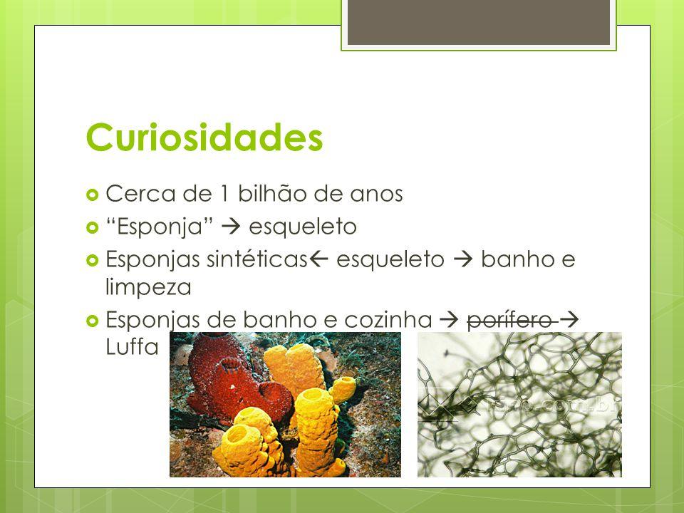 Referências Bibliográficas http://www.sobiologia.com.br/conteudos/R einos2/porifero2.php http://www.not1.xpg.com.br/poriferos- esponjas-animais-filtradores-reproducao-e- informacoes/ Para Viver Juntos – 7º ano; João Batista Vicentin Aguilar; EDIÇÕES SM LTDA; 2011 http://pt.wikipedia.org/wiki/Porifera