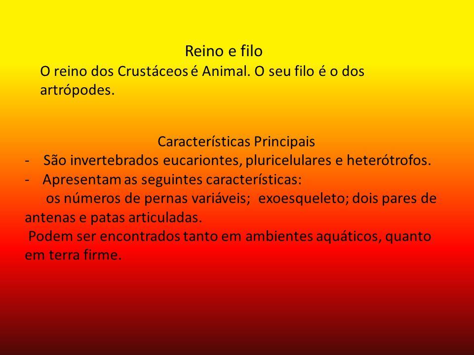 Reino e filo O reino dos Crustáceos é Animal. O seu filo é o dos artrópodes. Características Principais - São invertebrados eucariontes, pluricelulare