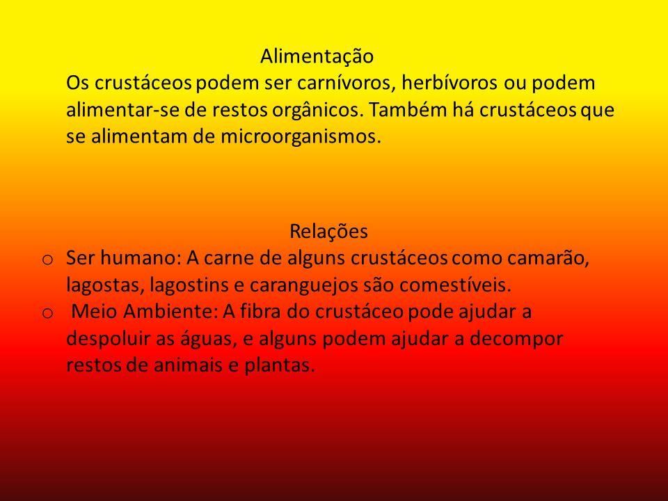 Curiosidades sobre o filo: Os artrópodes compõem o maior filo de animais existentes, representados por animais como os gafanhotos (insetos), as aranhas (aracnídeos), os caranguejos(crustáceos)
